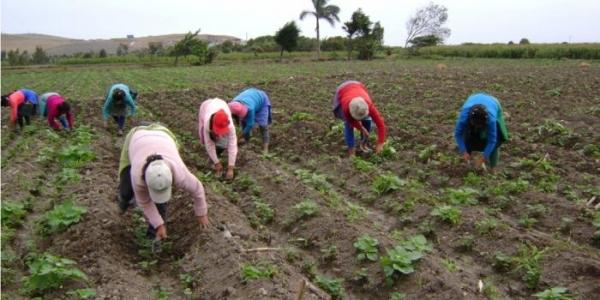agriculturayriego